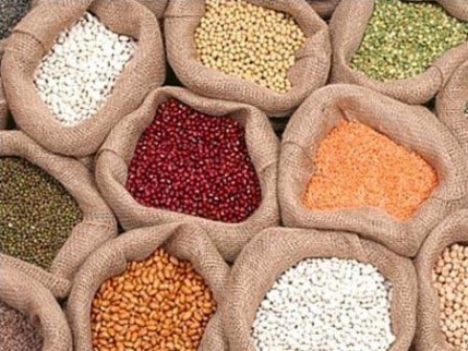 Profitable Export Business of Agro Commodities for sale in Delhi