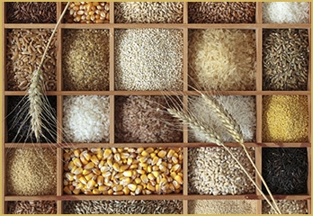 Multi Grain Food Processing plant project for sale in Karnataka.